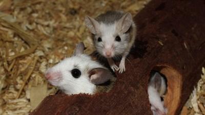 Конон Огородник: Много мышей – к неурожайному году