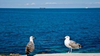 Чайки на Черном море