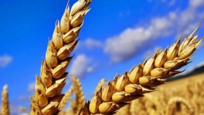 10 марта отмечают в Украине отмечают День земледельца