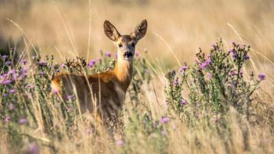 4 сентября отмечают День дикой природы