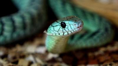 Всемирный день змеи (World Snake Day)