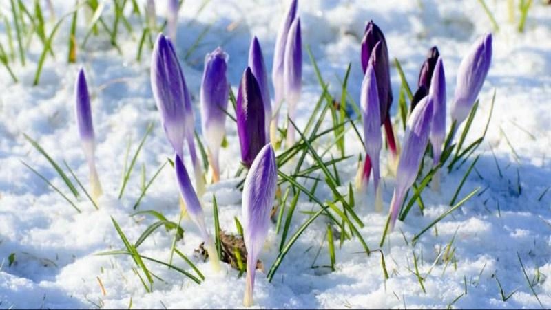 Закликание Весны